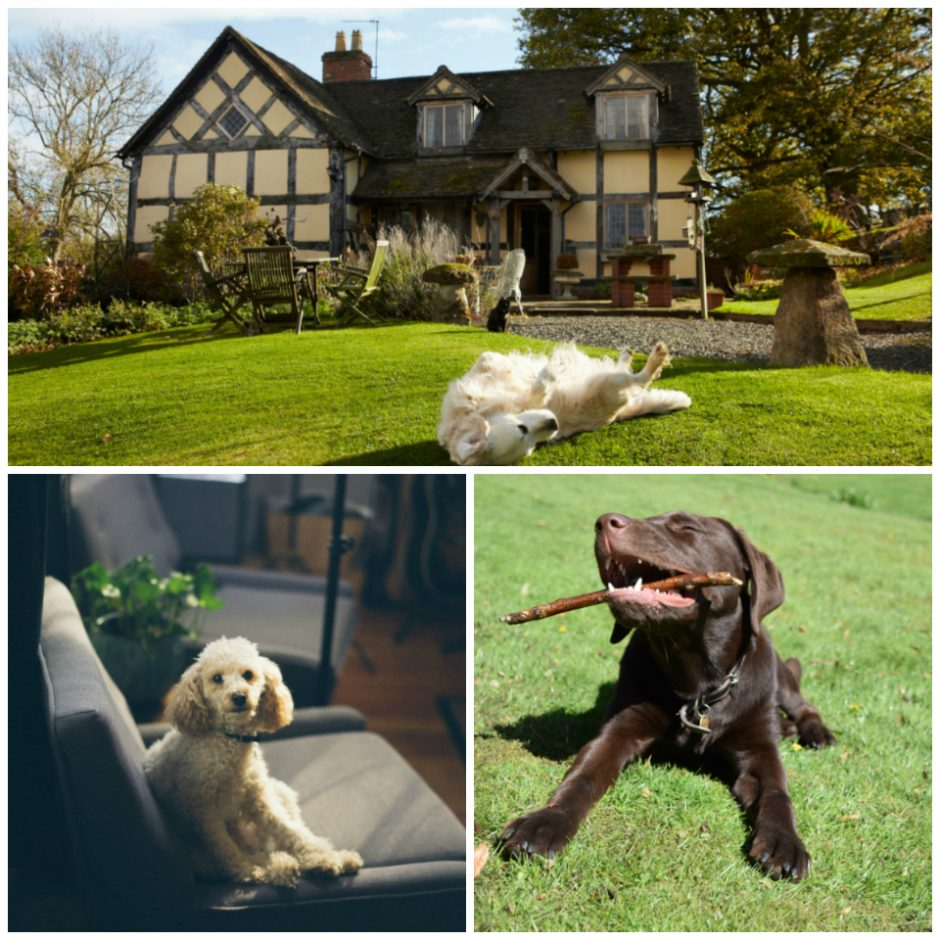 Places to pamper your pooch!